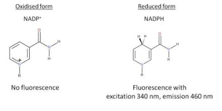Fluorescence properties of the cofactor